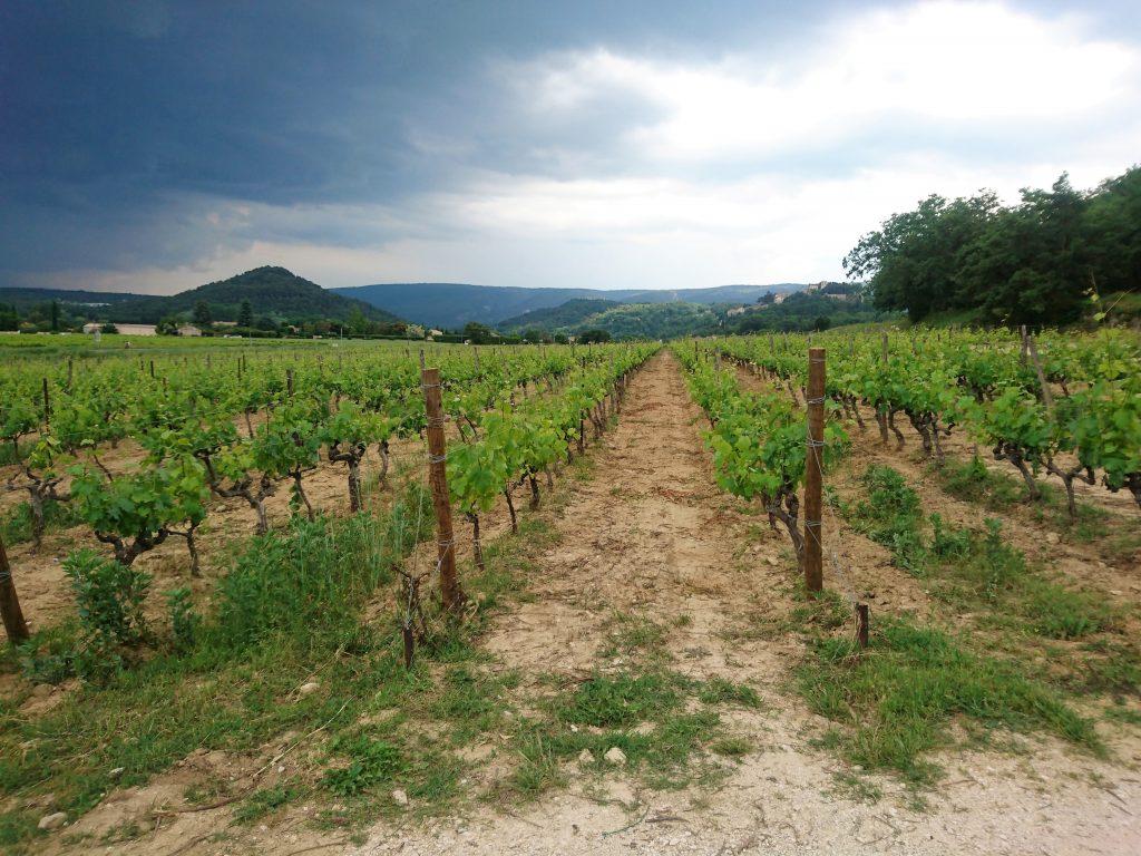 wijnvelden-provence