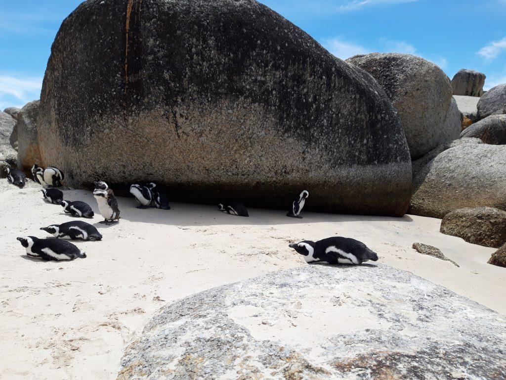 boulders-beach